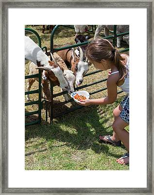 Girl Feeding Goats Framed Print by Jim West