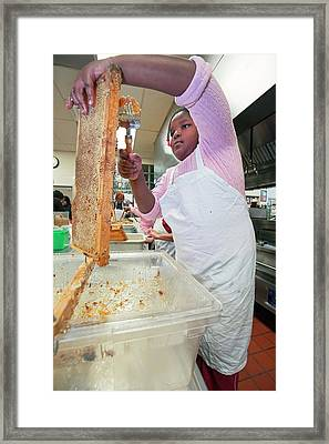 Girl Uncapping Honeycomb Framed Print by Jim West
