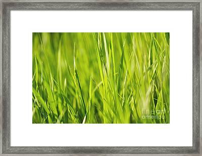 Grass Framed Print by Dan Radi