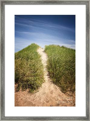 Grass On Sand Dunes Framed Print by Elena Elisseeva