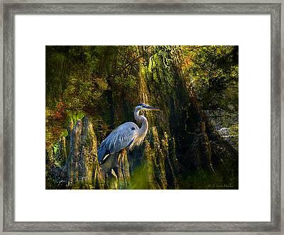 Great Blue Heron Slowly Strolling Framed Print by J Larry Walker