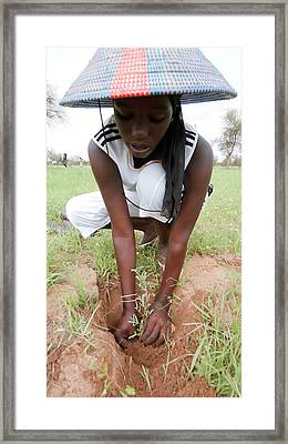 Great Green Wall Construction Framed Print by Thierry Berrod, Mona Lisa Production