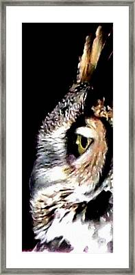 Great Horned Owl Side View Framed Print by Gail Matthews