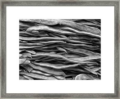 Green Beans Framed Print by Mountain Dreams