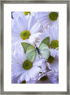 Green Butterfly  Framed Print by Garry Gay