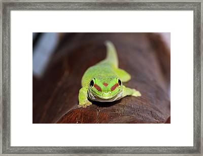 Green Day Gecko Framed Print by Dr P. Marazzi