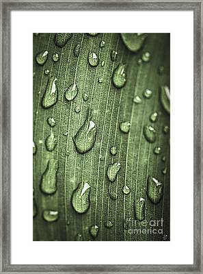 Green Leaf Abstract With Raindrops Framed Print by Elena Elisseeva