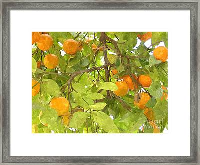 Green Leaves And Mature Oranges On The Tree Framed Print by Lanjee Chee