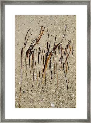 Gulf Art Framed Print by KM Corcoran