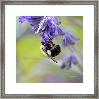 Hanging In There Framed Print by Suzanne Gaff