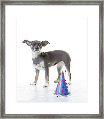 Happy Birthday Framed Print by Edward Fielding