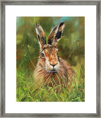 hARE Framed Print by David Stribbling