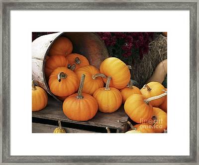 Harvested Pumpkins Framed Print by Tony Craddock