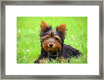 Hello Toby Framed Print by Angela Doelling AD DESIGN Photo and PhotoArt