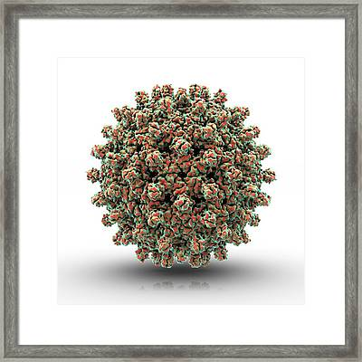 Hepatitis B Virus Particle Framed Print by Animate4.com/science Photo Libary