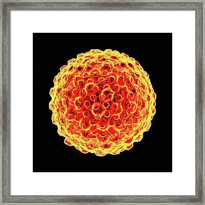 Herpes Simplex Framed Print by Mehau Kulyk
