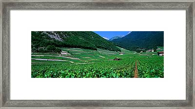 High Angle View Of A Vineyard, Valais Framed Print by Panoramic Images