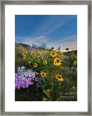 High Desert Spring Framed Print by Mike  Dawson