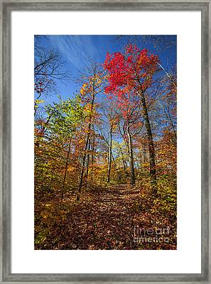 Hiking Trail In Fall Forest Framed Print by Elena Elisseeva