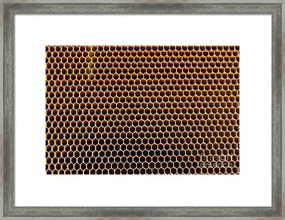 Honeycomb Core Framed Print by Mark Williamson