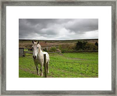 Horse Peering Over Fence, North Framed Print by John Short