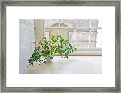 House Plant Framed Print by Tom Gowanlock