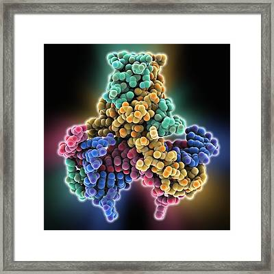 Hu Dna Binding Protein Molecule Framed Print by Science Photo Library