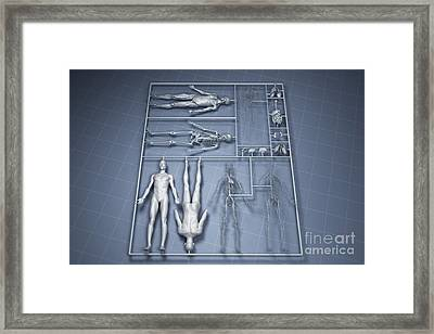 Human Cloning Framed Print by Science Picture Co