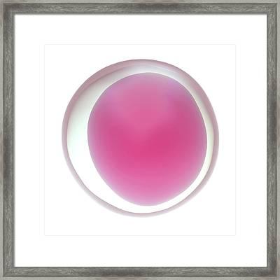 Human Egg Cell Framed Print by Maurizio De Angelis