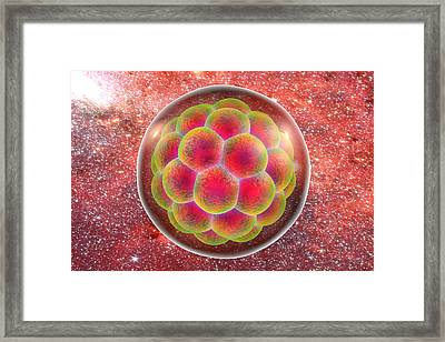 Human Embryo Framed Print by Kateryna Kon
