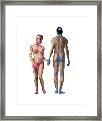 Human Erogenous Zones, Artwork Framed Print by Science Photo Library