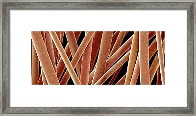 Human Hairs Framed Print by Susumu Nishinaga
