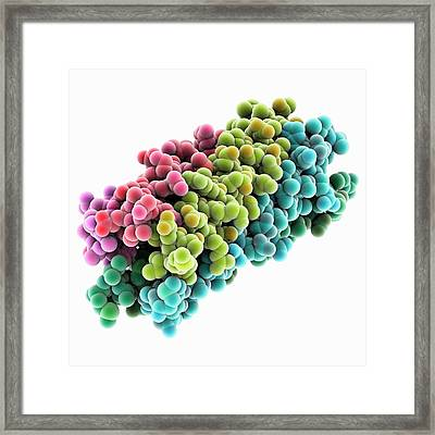 Human Rotavirus Enterotoxin Framed Print by Laguna Design