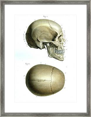 Human Skull Framed Print by Collection Abecasis