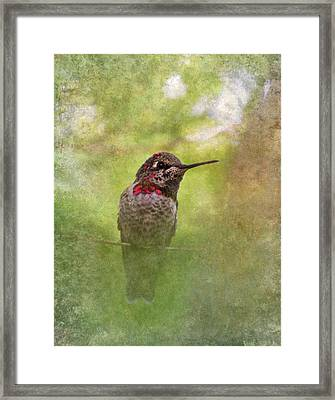 Hummingbird  Framed Print by Angie Vogel