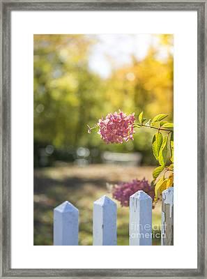 Hydrangeas In The Autumn Sun Framed Print by Diane Diederich