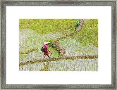 Igorot Tribal Woman With The Rice Framed Print by Keren Su