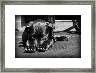 I'm Sorry Framed Print by Mountain Dreams