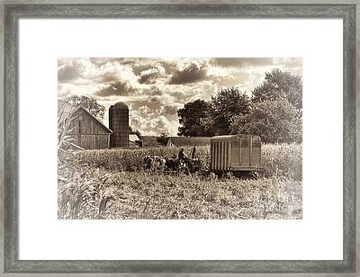 In The Corn Framed Print by David Arment