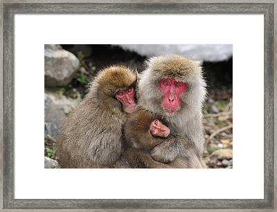 Japanese Macaque Mother With Young Framed Print by Thomas Marent