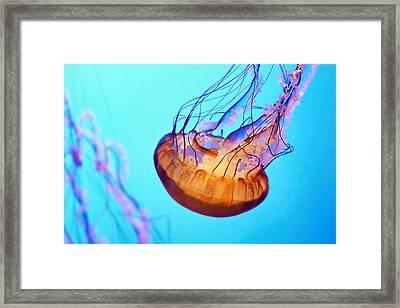 Jelly #3 Framed Print by Nikolyn McDonald