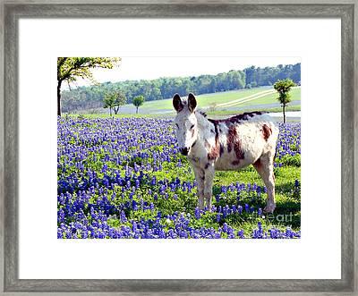 Jesus Donkey In Bluebonnets Framed Print by Linda Cox