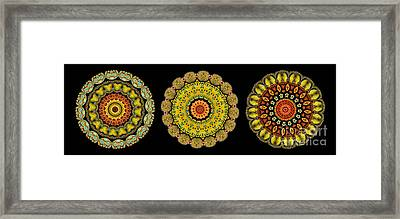 Kaleidoscope Ernst Haeckl Sea Life Series Triptych Framed Print by Amy Cicconi