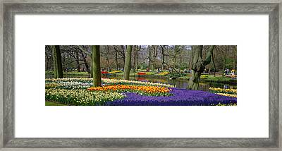 Keukenhof Garden Lisse The Netherlands Framed Print by Panoramic Images