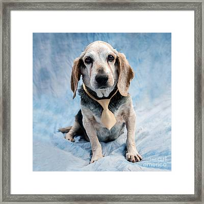 Kippy Beagle Senior And Best Dog Ever Framed Print by Iris Richardson