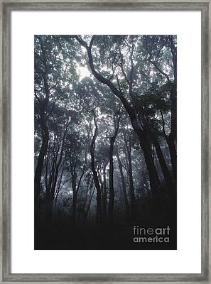 Koa Forest Framed Print by Art Wolfe