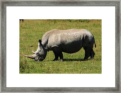 Lake Nakuru White Rhinoceros Framed Print by Aidan Moran