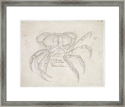 Land Crab Framed Print by Natural History Museum, London