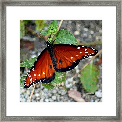 Last Butterfly Of The Season Framed Print by Suzanne Gaff