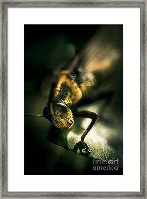 Leaf Bites Framed Print by Jorgo Photography - Wall Art Gallery